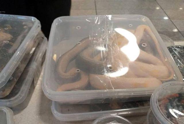 گونههای کشف شده در گمرک به مبدا باز میگردد