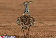 بزرگترین باند قاچاق پرنده در فارس منهدم شد