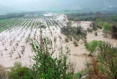 خسارت بیش از ۸۵۰ میلیارد تومانی به بخش کشاورزی آذربایجان غربی