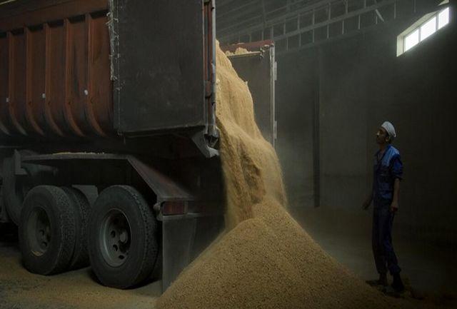 توقیف 4 دستگاه تریلی حامل 100 تن گندم قاچاق در سیستان و بلوچستان