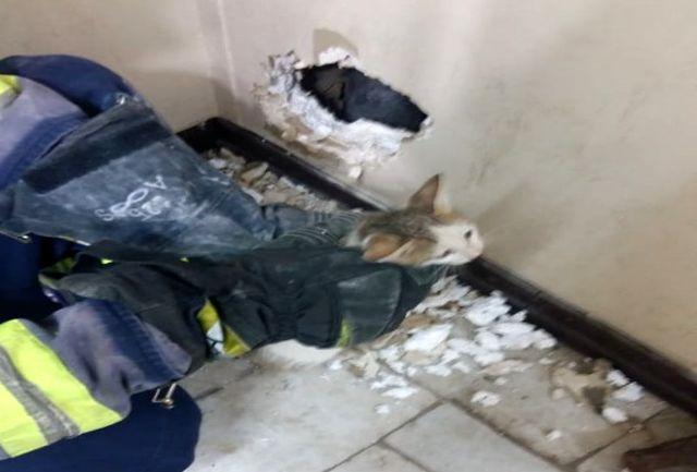 رهاسازی یک قلاده بچه گربه از شکاف دیوار درمانگاه کوی ملت+ببینید