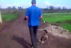 با دستور ویژه دادستان پارس آباد سگ آزار دستگیر شد