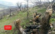 پیگیری ۱۸ پرونده تخریب و تصرف از ابتدای سال جاری