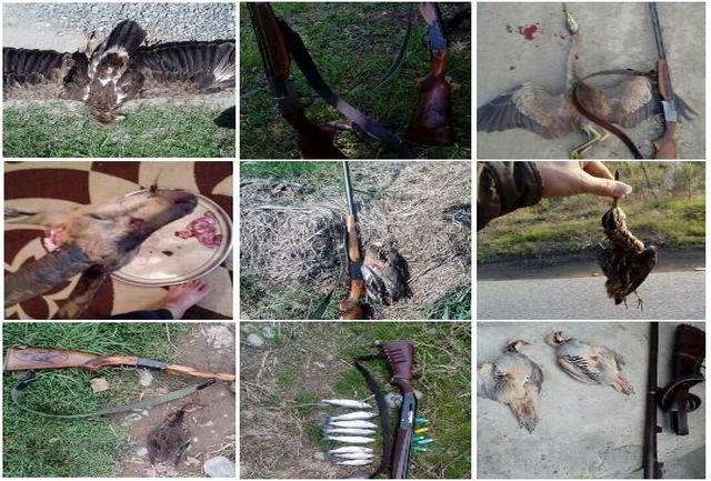 شکارچیان غیرمجاز نقره داغ شدند