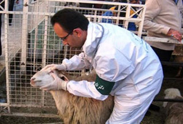مبارزه با بیماری تب برفکی در مازندران