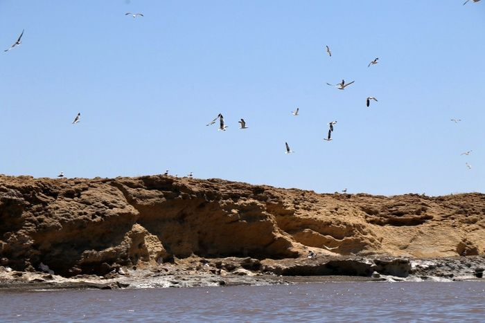 طرح معاون وزیر جهادکشاورزی برای تشکیل سازمان عمرانی دریاچه ارومیه
