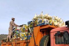 توقیف دو دستگاه کامیون حامل مرغ زنده قاچاق در زاهدان