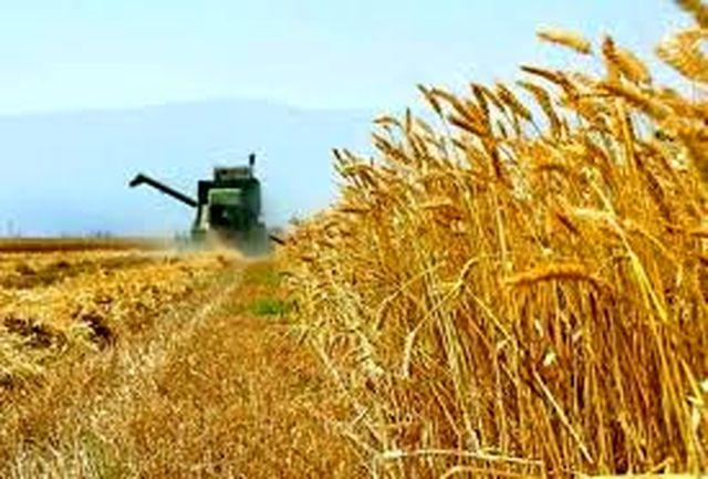 تحقق ۷۱ درصدی تعهد اشتغال بخش کشاورزی استان قزوین