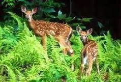 گرفتاری شکارچی غیر مجاز در