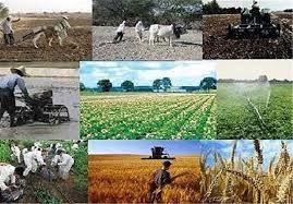 ابلاغ بیش از 35 درصد اعتبار سفر دولت به استان در بخش کشاورزی
