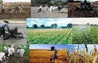 هفت کردستانی حایز رتبههای نمونه ملی کشاورزی شدند
