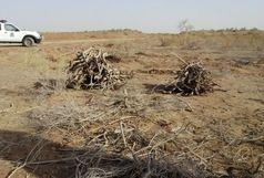 حمله قاچاقچیان چوب به مامور حفاظت منابع طبیعی و آبخیزداری هامون