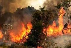 مزارع و باغات زرنه ایوان در آتش سوخت