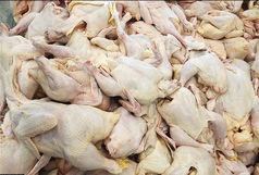 علت گرانی مرغ ؛ خروج  بی رویه مرغ از استانهاست
