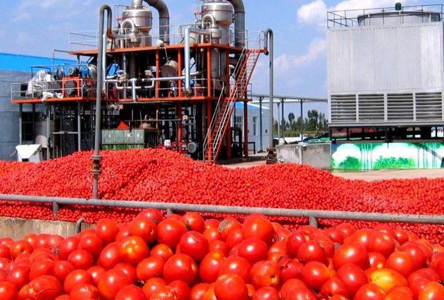 خرید تضمینی گوجه فرنگی توسط دولت