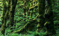 کوچ زمین خواران به سوی جنگل های هیرکانی/ عدم پرداخت حقوق قرقبانها سبب افزایش رشوه شده است