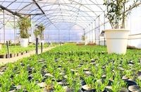 فضای گلخانهای شهرداری منطقه ۱ سه هزار مترمربع افزایش مییابد