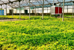 تولید سالانه بیش از یک میلیون گلدان های زینتی در قم/صرفه جویی 4.5 میلیاردی