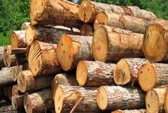 کشف 40 تُن چوب قاچاق در 5 ماهه ابتدایی سال 98