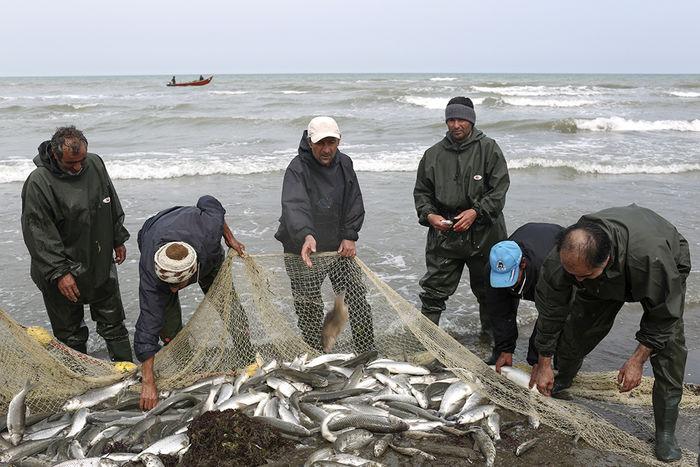 خرید حمایتی محصولات پرورش ماهی در دریا آغاز میشود