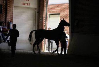 چهارمین جشنواره بزرگ اسب اصیل ترکمن پایتخت