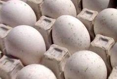 کشف بیش از یک تن تخم مرغ فاسد در آستارا