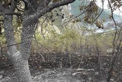 جنگل های منطقه کیارق کلیبر طعمه حریق شد