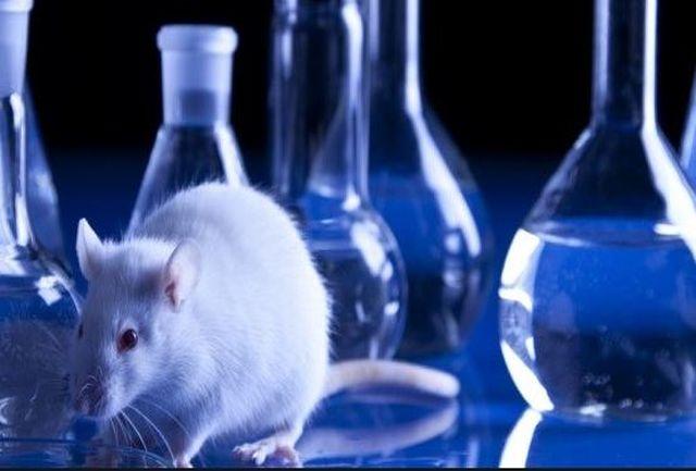آزمایشگاه مطالعات حیوانی دانشگاه، جزو ۱۰ آزمایشگاه برتر کشور