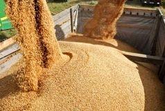 مدیریت خوراک دام در دستورکار ستاد تنظیم بازار  است