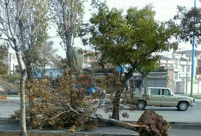 مصدومیت 3 نفر بر اثر سقوط درخت بر روی خودرو در فومن
