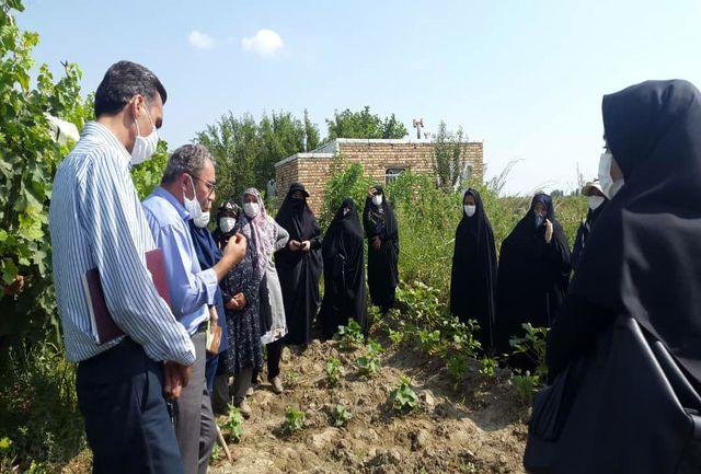 اجرای طرح آموزش و ترویج تولید محصول سالم در شهرستان ارومیه