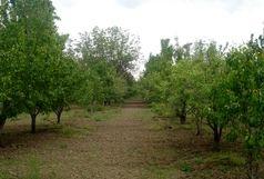 هشدار به کشاورزان قزوینی برای  ورود سامانه سرد و بارشی