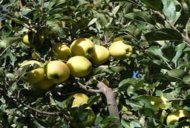 پیش بینی تولید بیش از 57هزار تن محصولات باغی در شهرستان کرمانشاه