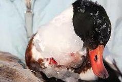تصاویر یخ زده پرندگان و منازل اصلا متعلق به خلخال نیست