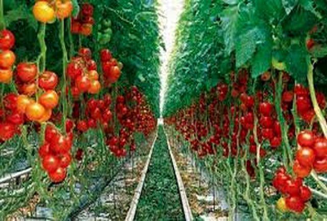 هدفگذاری صادرات تولیدات کشاورزی استان سمنان ۳۵ میلیون دلار است
