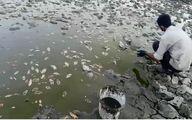 انتقال ماهیان سد خشک شده ملاطالب ازنا به سد حوضیان الیگودرز
