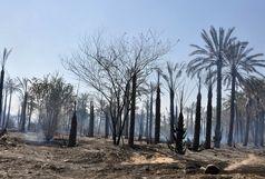 در آتش سوختن پنج هکتار از باغ های کهنوج
