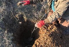 کاشت دو هزار و 200 نهال و بذر بلوط در دانشگاه کردستان