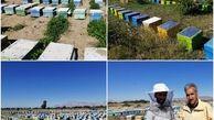 کوچ ۲۵ زنبوردار با ۱۳ هزار کلنی به میناب