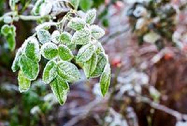 تداوم سرما و یخبندان در خراسان جنوبی