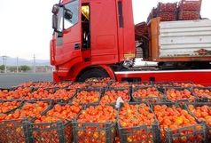 رشد 44 درصدی ارزش صادرات محصولات کشاورزی در 3 ماه اول سال 99