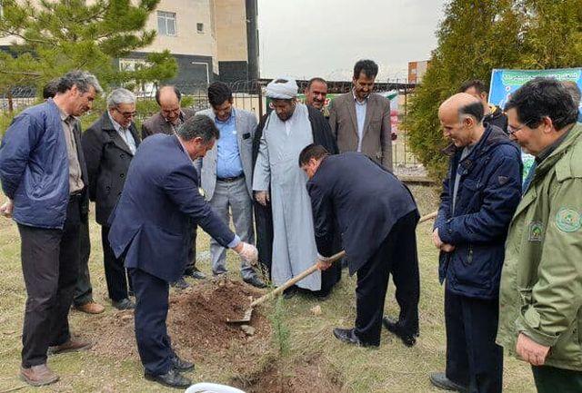توزیع ۱۲۰ هزار اصله نهال در شهرستان نهاوند همزمان با روز درختکاری