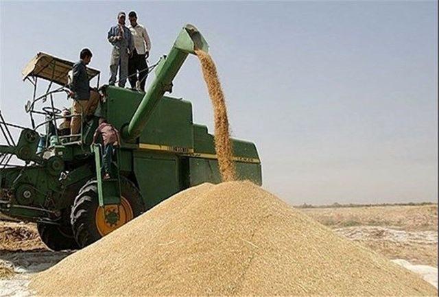 رشد 300 درصدی تولید گندم در قصرشیرین