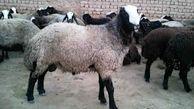 اگر کسی توانایی خرید گوسفند و قربانی کردن آن در عید قربان را ندارد، چه کند؟