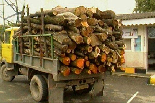 کشف محموله بزرگ قاچاق چوب
