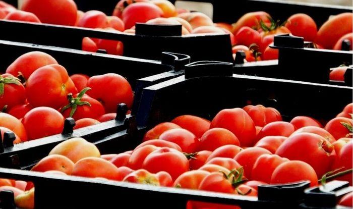 ورود 50 هزار تن گوجه فرنگی از شهرستان مهر به بازار