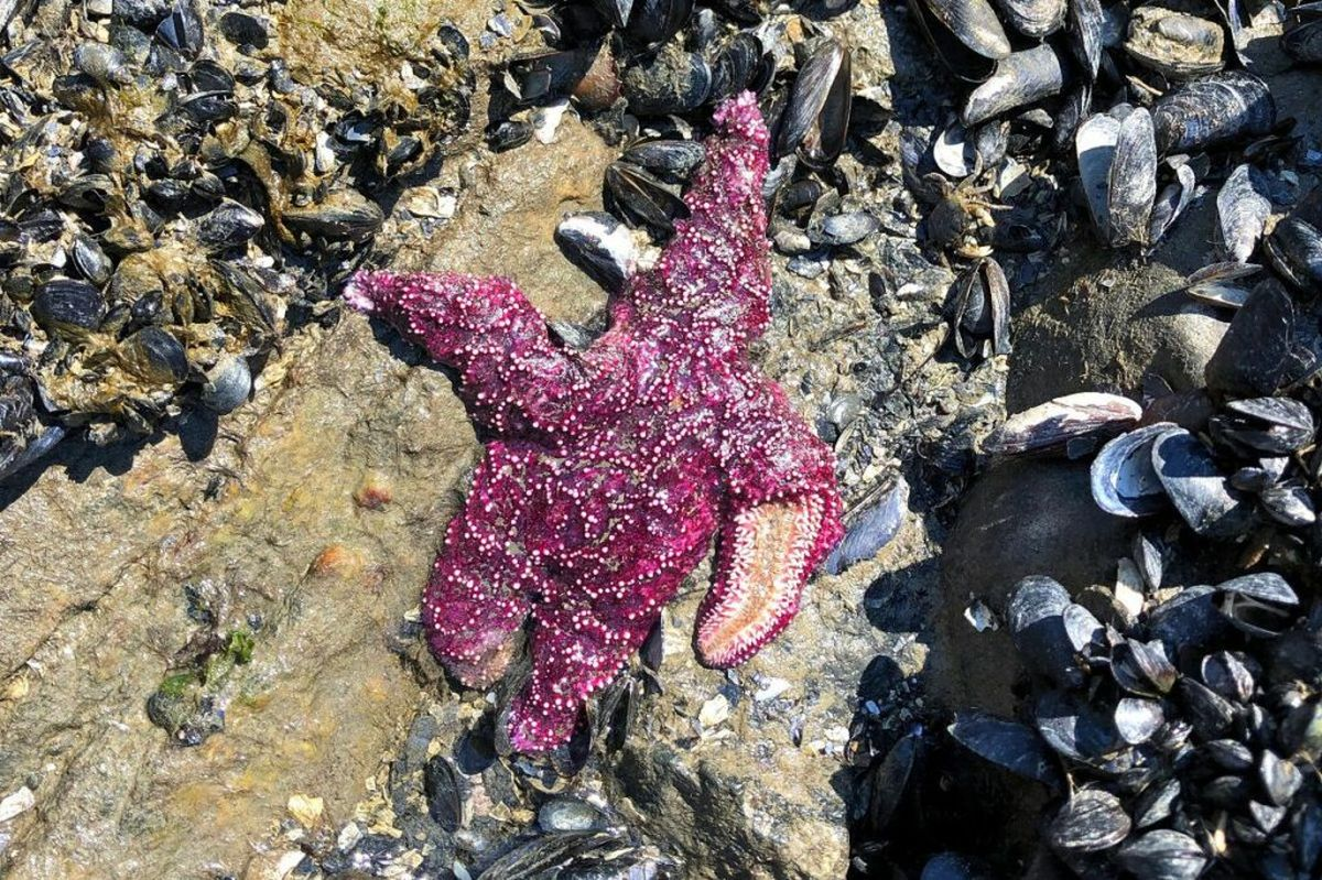 گرما بیش از یک میلیارد جانور دریایی را تلف کرد
