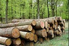 2 تن چوب قاچاق در شهرستان آوج کشف شد