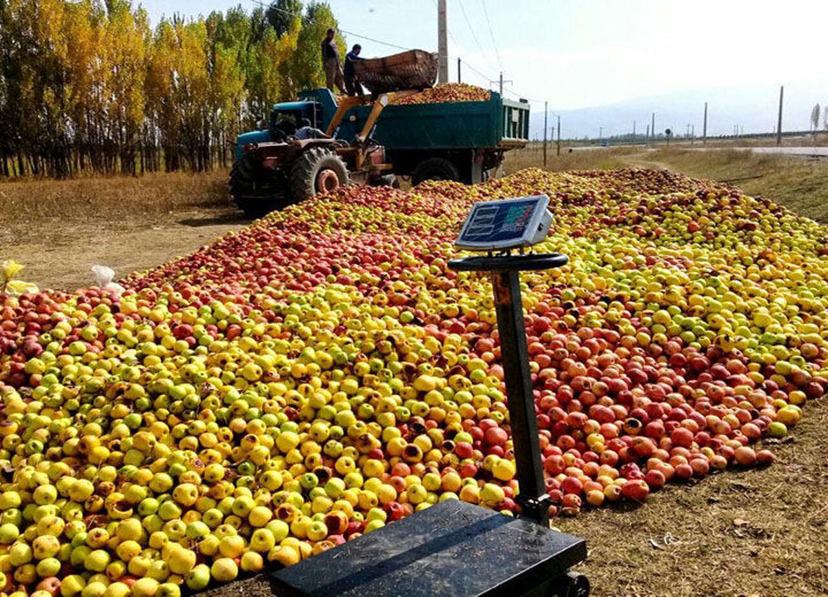تاکید بر روند جذب سیب صنعتی توسط واحدهای صنایع تبدیلی استان آذربایجانغربی