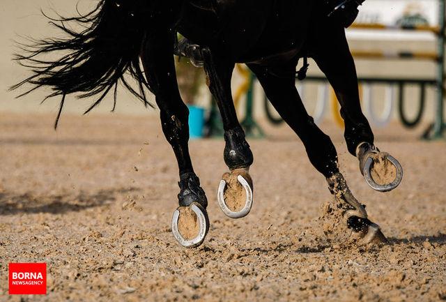 اسبهای ایران به زنجیره بینالمللى متصل شدند